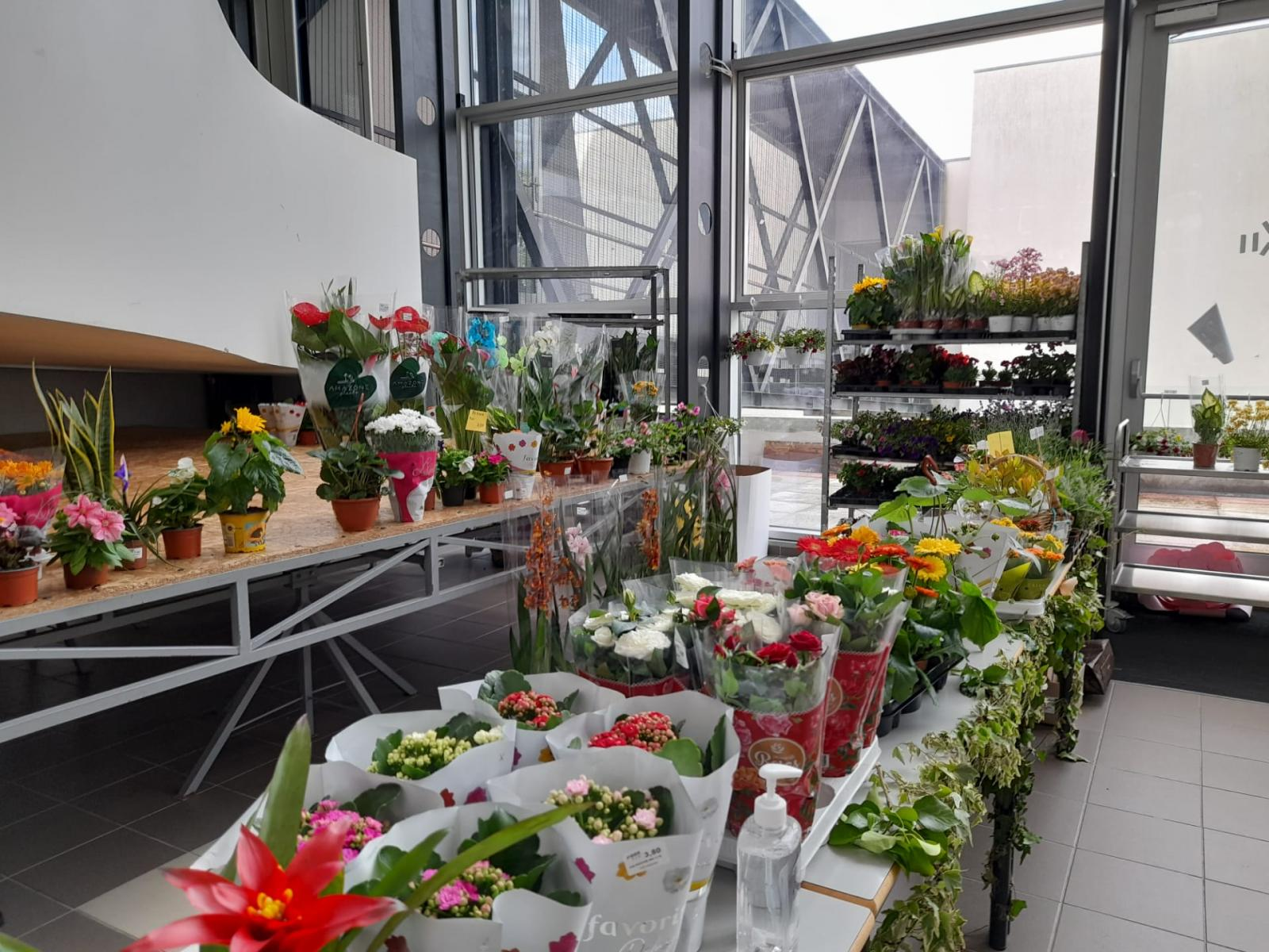 Feira das plantas